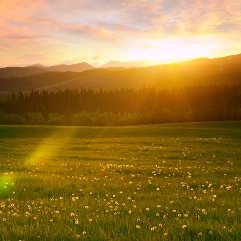 The sunset was gorgeous and doing a tremendous job of back-lighting these dandelions near Millarville Alberta.