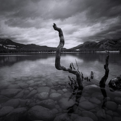 A black and white picture of Annette Lake in Jasper National Park Canada with rocks and drift wood in the foreground.