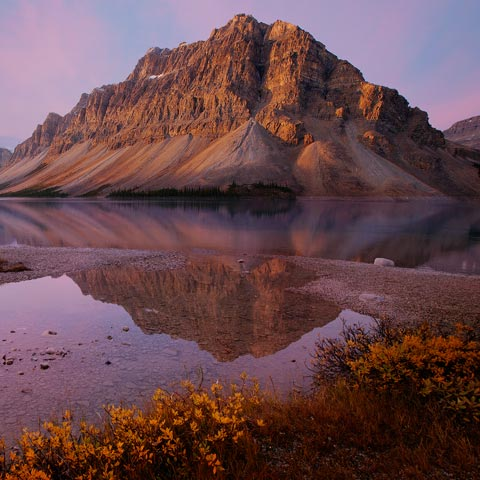 Bow Lake at sunrise with parts of Waputik range and overhanging glaciers