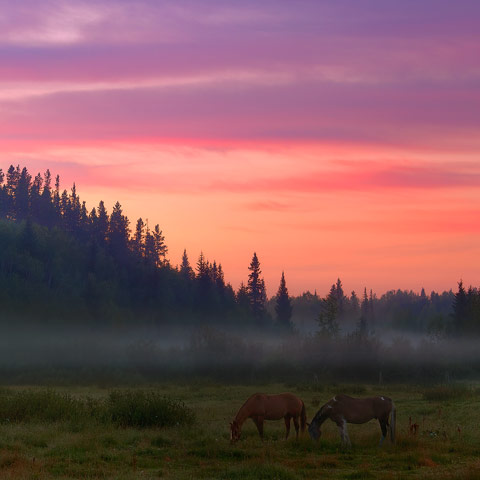 A stunning demonstration of the archetypes from the foothills area including horses, hills, and fog.