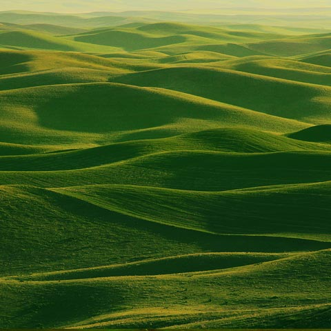 This was taken on the green side of Steptoe Butte in the Palouse area of Washington.  It was very green indeed.