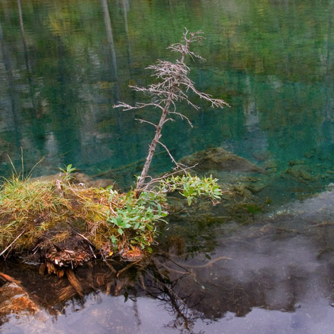 A picture of a twig sticking out of Grassi Lakes near Canmore Alberta which have super vibrant colours because of the minerals in the water.