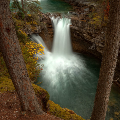 A picture of a smooth flowing waterfall captured between two pine trees in Johnston's Canyon Banff National Park Canada.