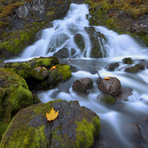 A picture of some yellow autumn leaves placed in front of waterfalls that feed Upper Kananaskis Lake with moss covered rocks throughout.
