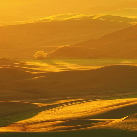 This area of Washington is one of my favorite places to take pictures.  This Palouse shot features a lone tree and a road with yellow sunrise light.