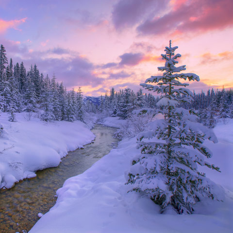 A winter shot of Louise Creek taken at sunrise featuring snow covered pines and a quiet creek.