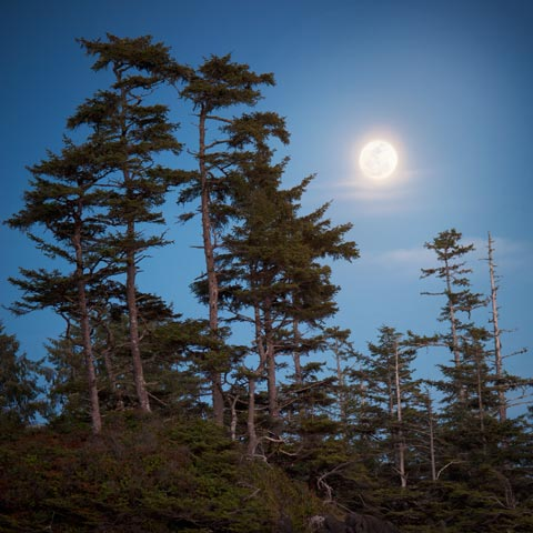 The moon was full and the tides were high on my trip to Vancouver Island