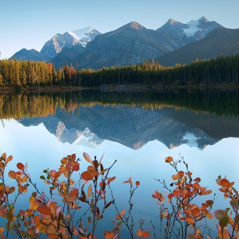 The mountains reflected in Herbert Lake (near Lake Louise) taken at sunrise with vibrant red autumn leaves in the foreground.