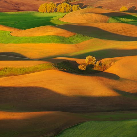 A photograph taken with a telephoto lens showing an abstract view of the rolling hills and cottonwoods of Palouse in Washington State